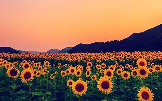 Primavera e vitamina D